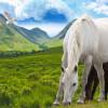 Horse Racing Course – the Emerging Favourite as a Wedding Venue